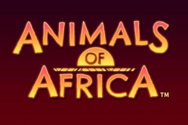 Animals of Africa Slot Game Free Play at Casino Ireland